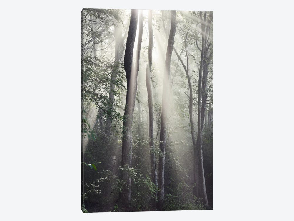 Woodland Sun by Nicholas Bell Photography 1-piece Canvas Wall Art