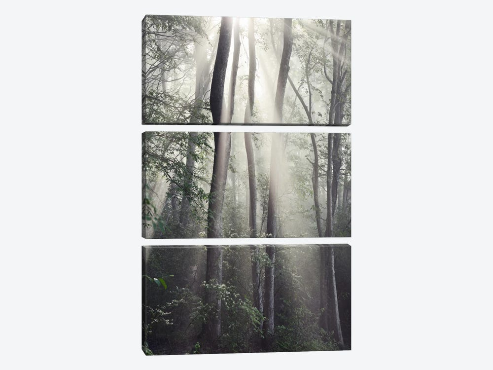 Woodland Sun by Nicholas Bell Photography 3-piece Canvas Wall Art