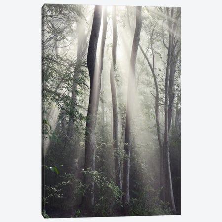 Woodland Sun Canvas Print #14668} by Nicholas Bell Photography Canvas Print