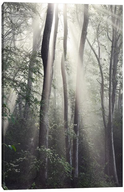 Woodland Sun Canvas Art Print