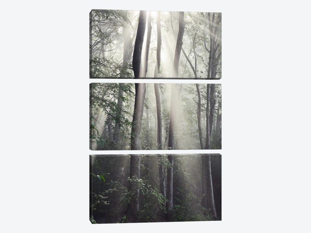 Woodland Sun by Nicholas Bell Photography 3-piece Canvas Wall Art