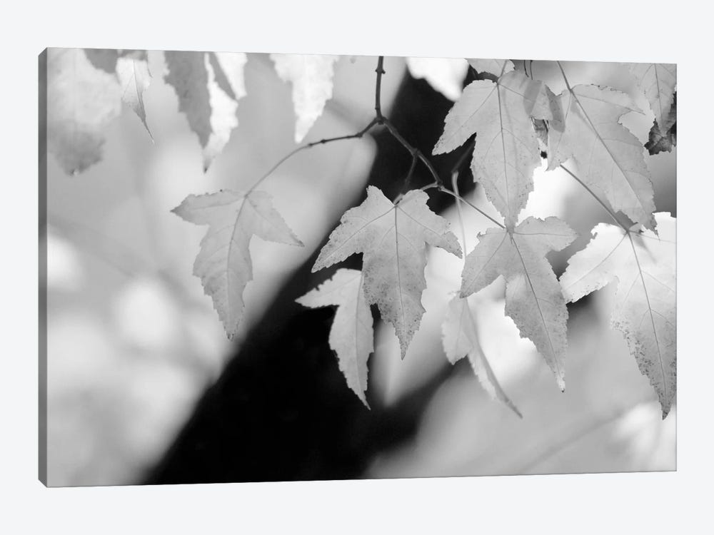 Leaves and Light by Nicholas Bell Photography 1-piece Canvas Print