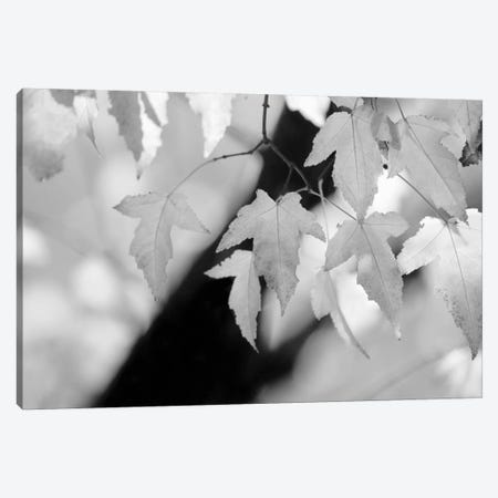 Leaves and Light Canvas Print #14669} by Nicholas Bell Photography Art Print