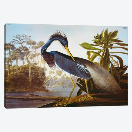 "Louisiana Heron From ""Birds of America"" Canvas Print #1468} by John James Audubon Canvas Wall Art"