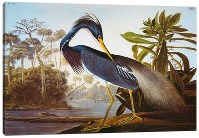 "Louisiana Heron From ""Birds of America"" Canvas Art Print"