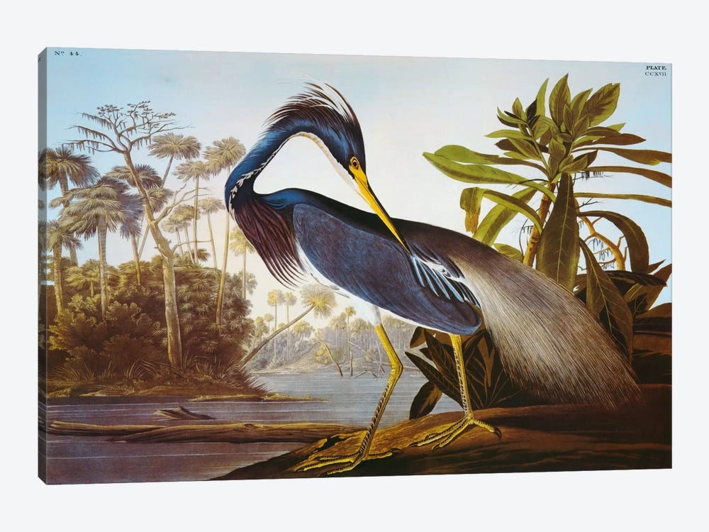 "Louisiana Heron From ""Birds of America"" 1-piece Canvas Art Print"