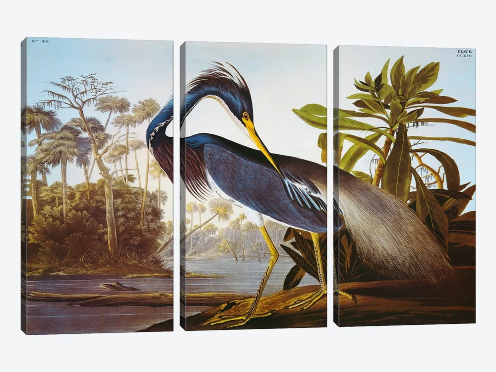 "Louisiana Heron From ""Birds of America"" by John James Audubon 3-piece Canvas Print"