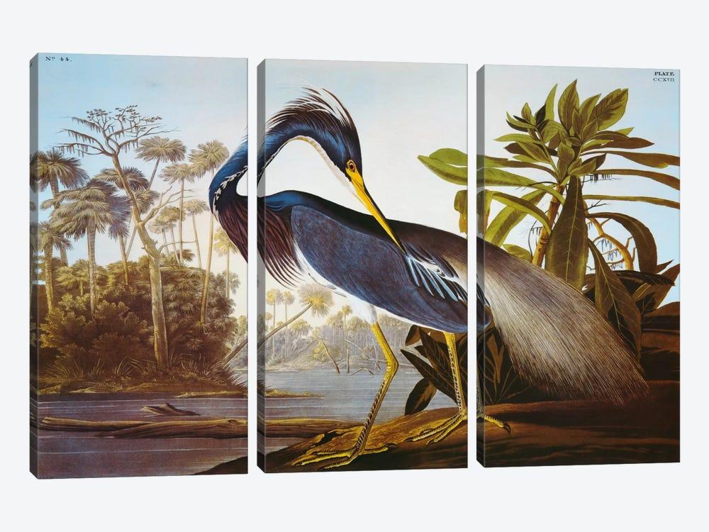 "Louisiana Heron From ""Birds of America"" by John James Audubon 3-piece Canvas Print"