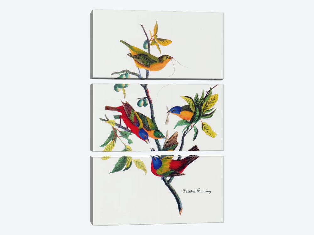 Painted Bunting by John James Audubon 3-piece Canvas Art