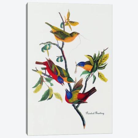 Painted Bunting Canvas Print #1469} by John James Audubon Canvas Artwork