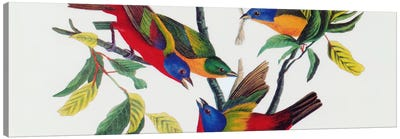 Painted Bunting Canvas Print #1469PAN