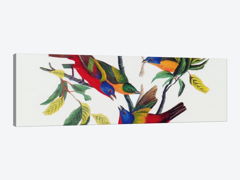 Painted Bunting by John James Audubon 1-piece Canvas Print