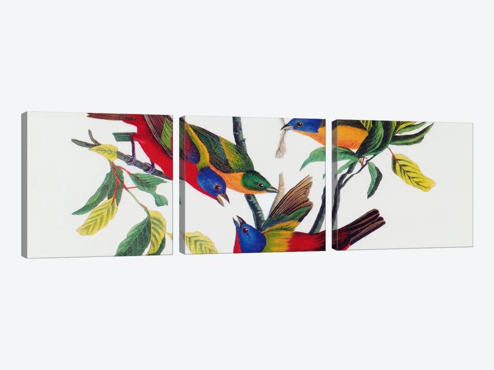 Painted Bunting by John James Audubon 3-piece Canvas Art Print