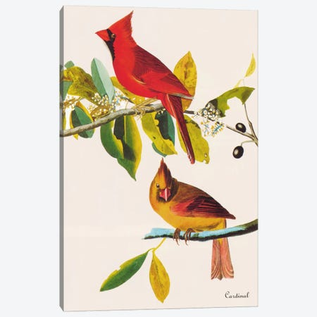 Cardinal Canvas Print #1471} by John James Audubon Canvas Print