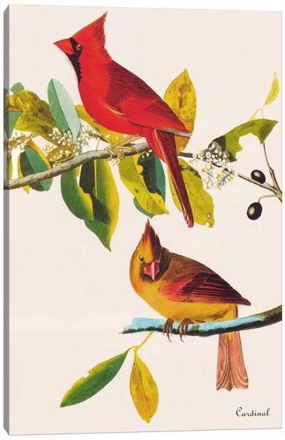 Cardinal Canvas Print #1471