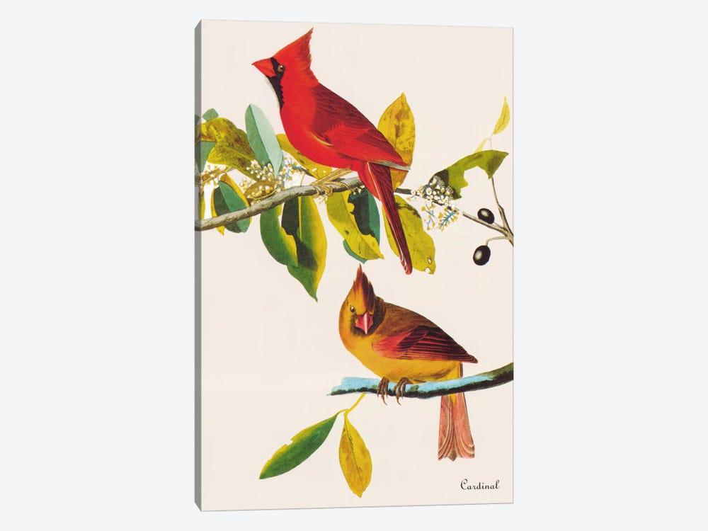 Cardinal by John James Audubon 1-piece Canvas Art Print