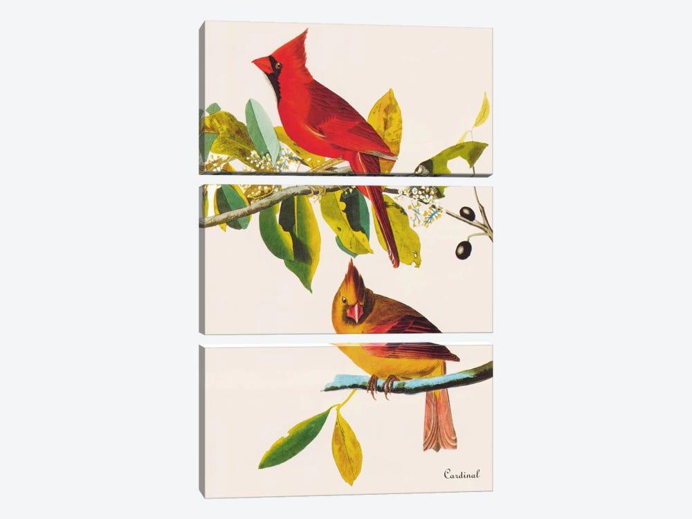 Cardinal by John James Audubon 3-piece Art Print