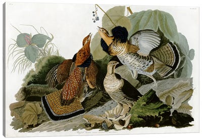 Ruffed Grouse Canvas Art Print