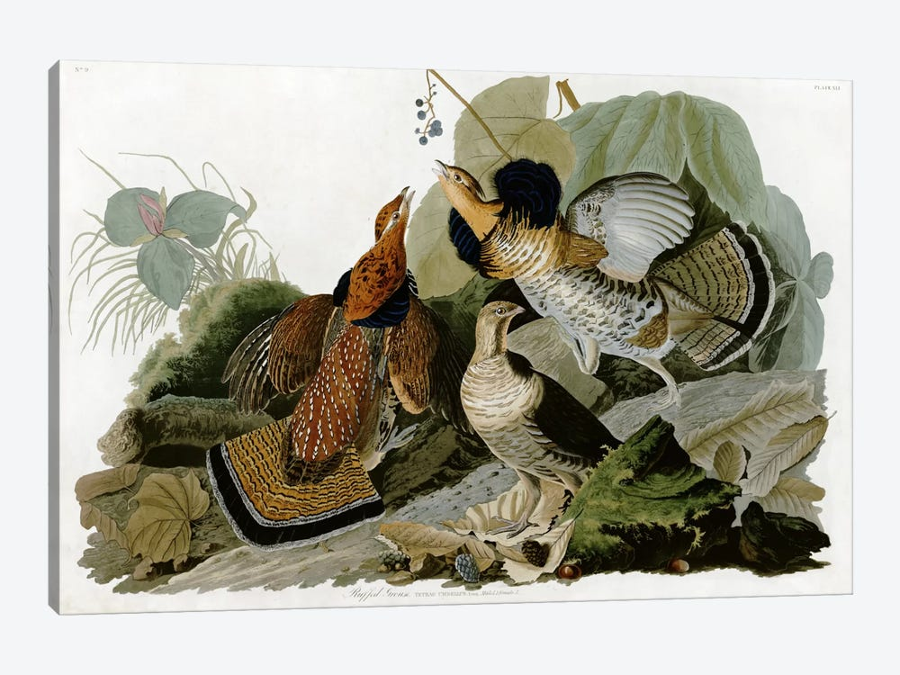 Ruffed Grouse by John James Audubon 1-piece Art Print