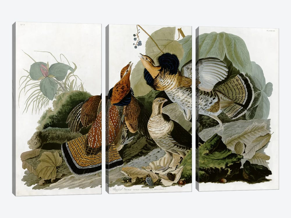 Ruffed Grouse by John James Audubon 3-piece Art Print
