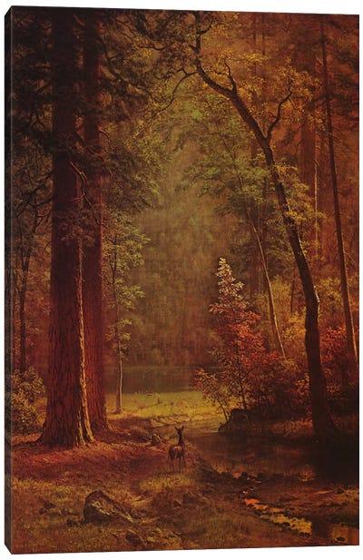 Dogwood Canvas Print #1490