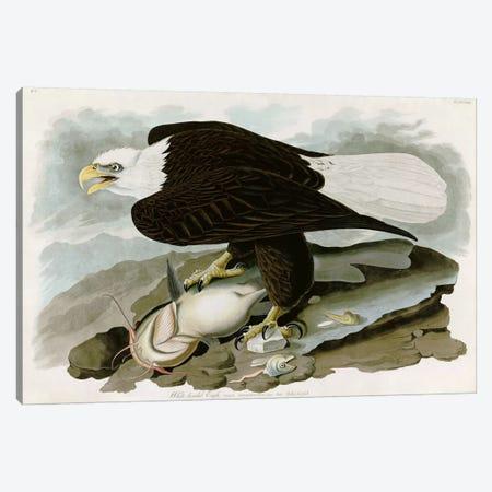 White-headed Eagle Canvas Print #1509} by John James Audubon Art Print