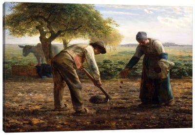 Potato Planters Canvas Art Print