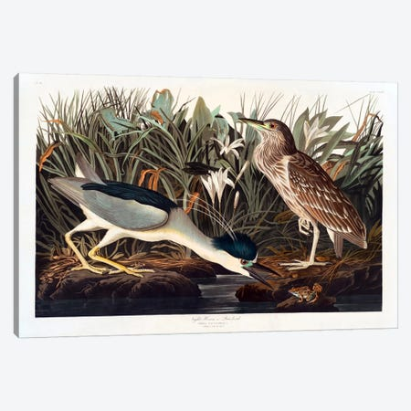 Black-crowned Night Heron Or Qua Bird 3-Piece Canvas #1515} by John James Audubon Canvas Art Print