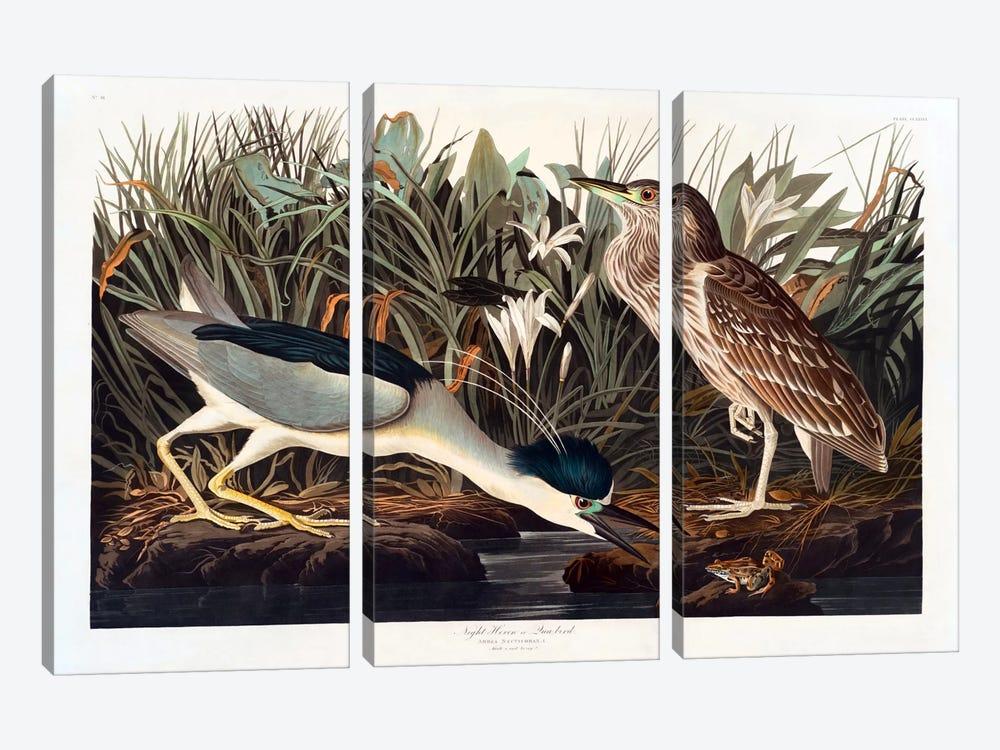 Black-crowned Night Heron Or Qua Bird by John James Audubon 3-piece Canvas Art