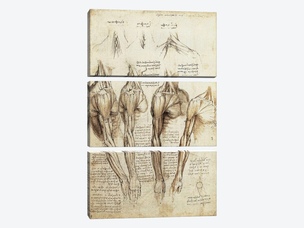Study of Arms and Shoulders by Leonardo da Vinci 3-piece Canvas Artwork