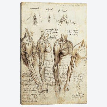 Study of Arms and Shoulders Canvas Print #15386} by Leonardo da Vinci Canvas Artwork