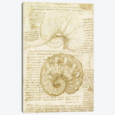 Drawing of the Uterus of a Pregnant Cow, 1508 Canvas Print #15391} by Leonardo da Vinci Canvas Art