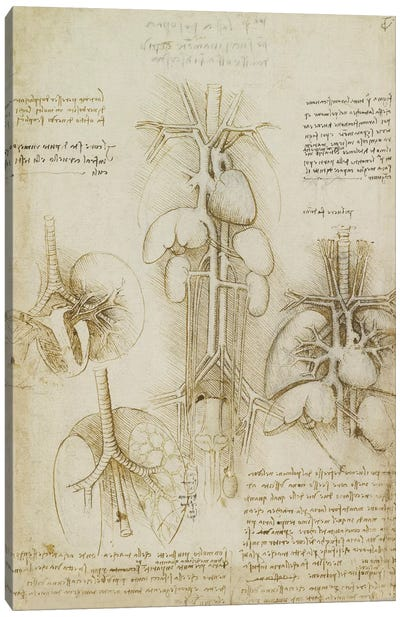 Drawing of the Heart and Lungs by Leonardo da Vinci Canvas Artwork