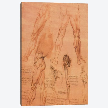 Studies of Legs of Man and the Leg of a Horse, 1506 Canvas Print #15402} by Leonardo da Vinci Canvas Art