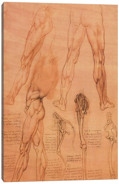 Studies of Legs of Man and the Leg of a Horse, 1506 Canvas Art Print