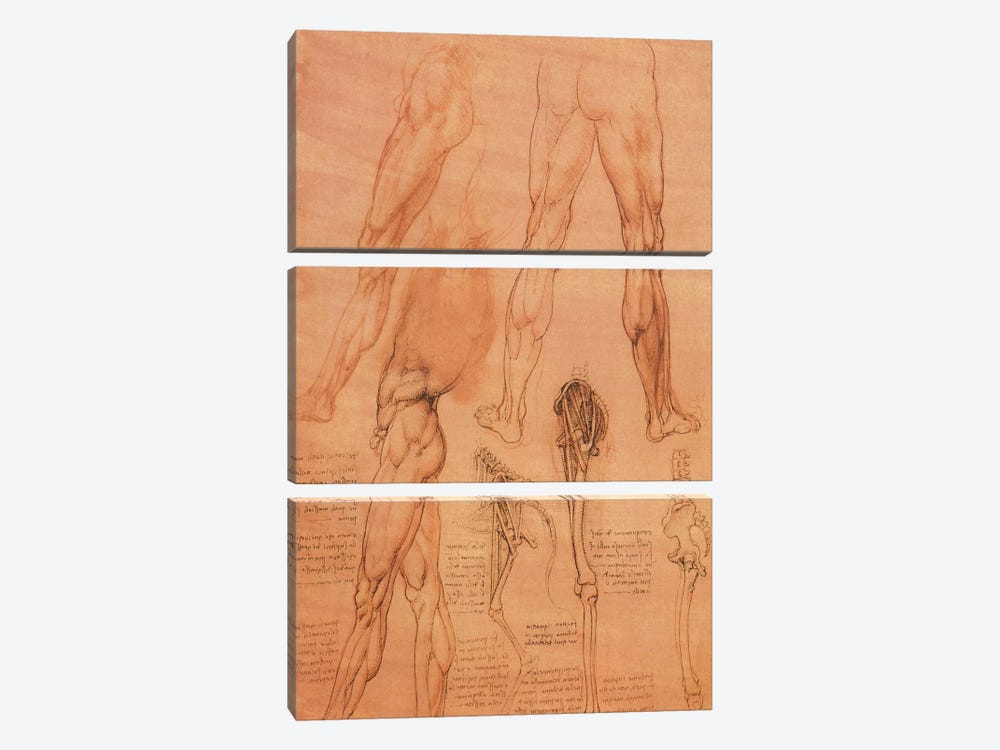 Studies of Legs of Man and the Leg of a Horse, 1506 by Leonardo da Vinci 3-piece Canvas Art Print
