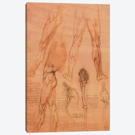 Studies of Legs of Man and the Leg of a Horse, 1506 Canvas Print #15402} by Leonardo da Vinci Canvas Art