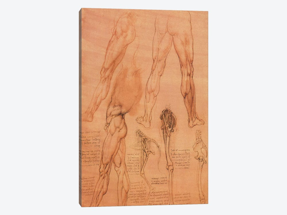 Studies of Legs of Man and the Leg of a Horse, 1506 by Leonardo da Vinci 1-piece Canvas Art Print