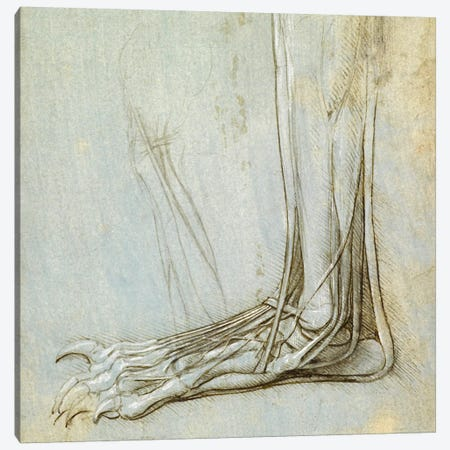 The Anatomy of a Foot, 1485 Canvas Print #15403} by Leonardo da Vinci Canvas Wall Art
