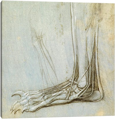 The Anatomy of a Foot, 1485 Canvas Art Print
