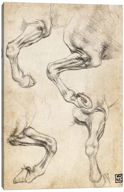 Studies of Horse's Legs by Leonardo da Vinci Canvas Art