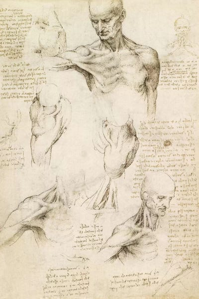 oversize print Vitruvian Man fine art print fine reproduction 1490 Leonardo Da Vinci