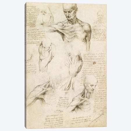 Superficial Anatomy of the Shoulder and Neck (Recto), 1510 Canvas Print #15410} by Leonardo da Vinci Art Print