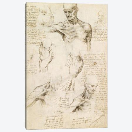 Superficial Anatomy of the Shoulder and Neck (Recto), 1510 Canvas Print #15410} by Leonardo da Vinci Art Print