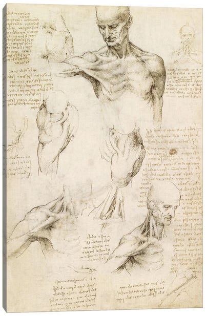 Superficial Anatomy of the Shoulder and Neck (Recto), 1510 Canvas Art Print