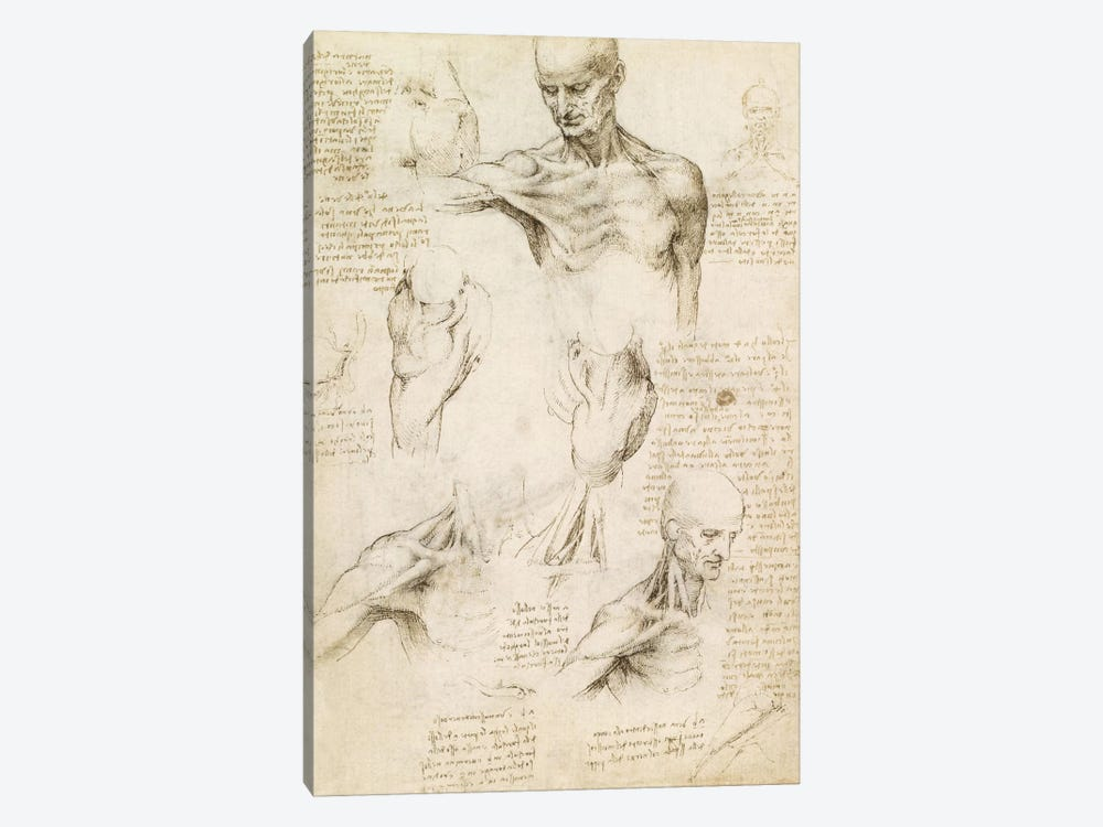 Superficial Anatomy of the Shoulder and Neck (Recto), 1510 by Leonardo da Vinci 1-piece Canvas Wall Art