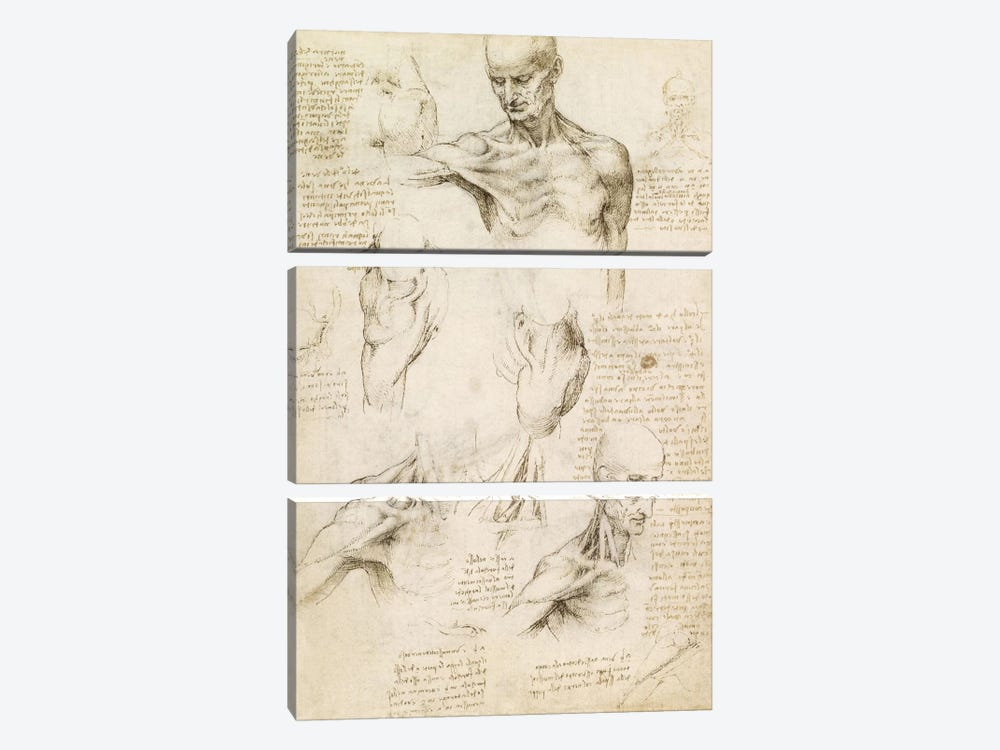 Superficial Anatomy of the Shoulder and Neck (Recto), 1510 by Leonardo da Vinci 3-piece Canvas Wall Art
