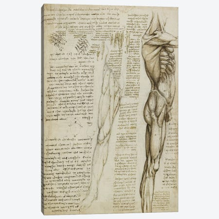 The Muscles of the Leg. 1511 Canvas Print #15412} by Leonardo da Vinci Canvas Art Print