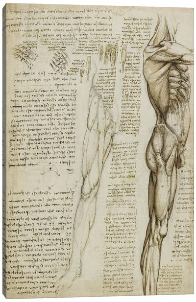 The Muscles of the Leg. 1511 by Leonardo da Vinci Canvas Art Print