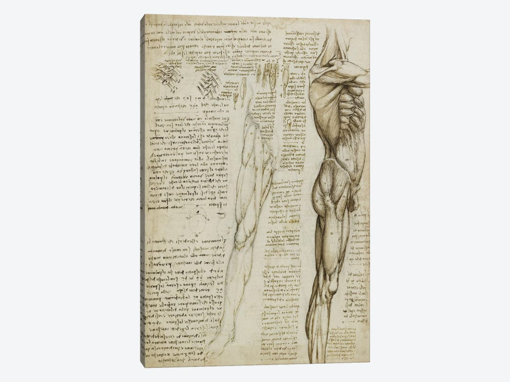 The Muscles of the Leg. 1511 by Leonardo da Vinci 1-piece Canvas Art